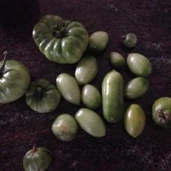 Gren tomatoes